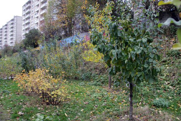 13_11_23_jardin_etterbeek_10.JPG