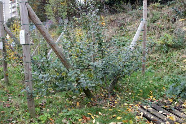 13_11_23_jardin_etterbeek_12.JPG