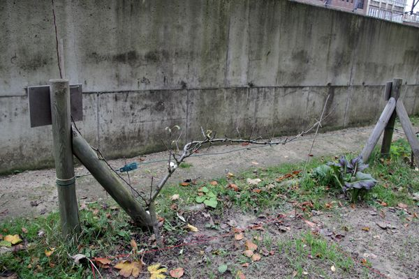 13_11_23_jardin_etterbeek_14.JPG
