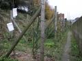 13_11_23_jardin_etterbeek_11.JPG